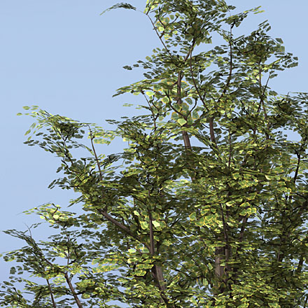 DOSCH 3D: Trees & Conifers V3 sample-image